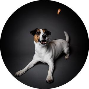 Hund fixiert Würstchen welches auf ihn zufliegt